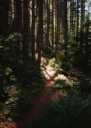 The trail winds through trees and spotty sunlight.